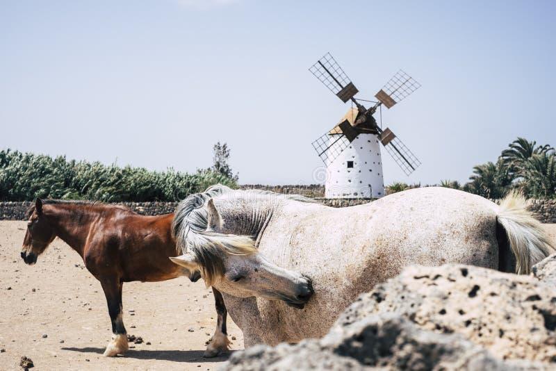 Para konie żyje swobodnie obraz royalty free