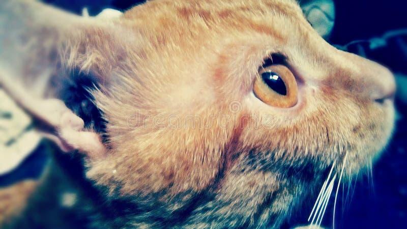 Para los amantes del gato - ojo observador fotos de archivo libres de regalías