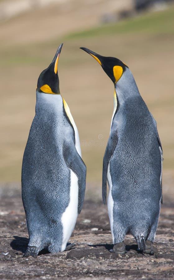 Para lovebirds obrazy royalty free