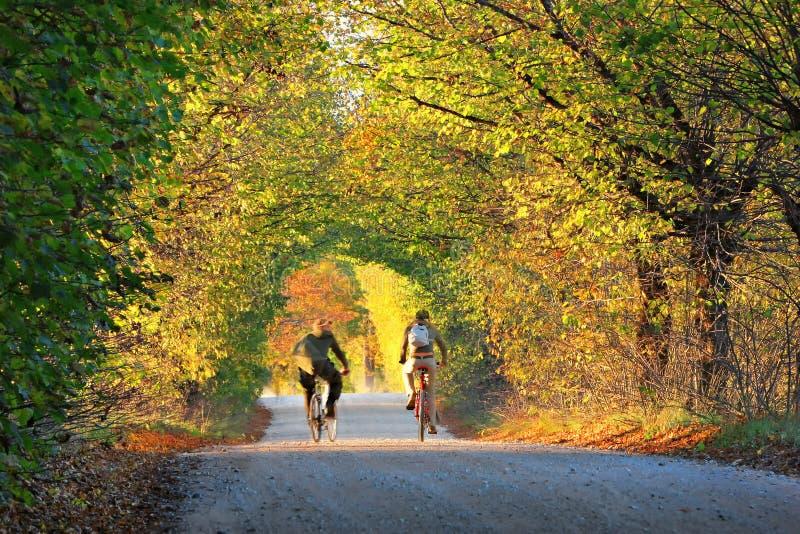 Download Para Młodzi Ludzie Na Rowerach W Parkowej Alei Obraz Stock - Obraz złożonej z samiec, dorosły: 53788901