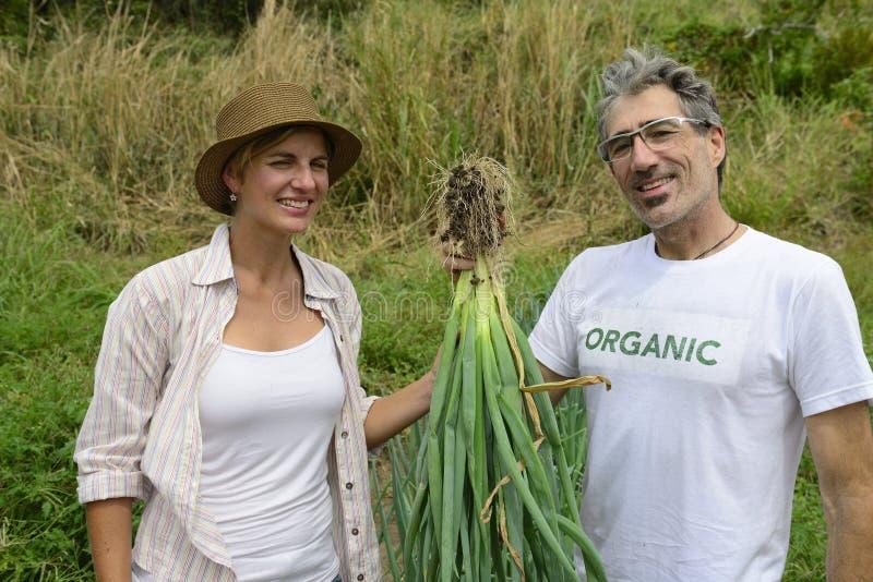 Para organicznie rolnicy pokazuje zieloną cebulę zdjęcia royalty free