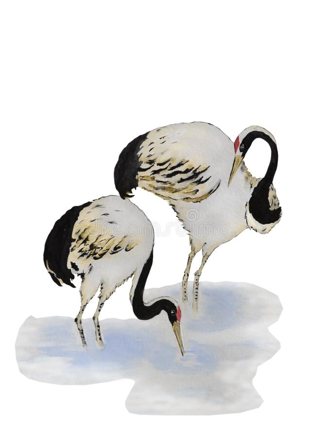 Para piękni żurawie royalty ilustracja