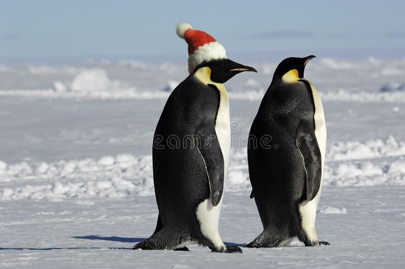para pingwina świąt zdjęcia royalty free