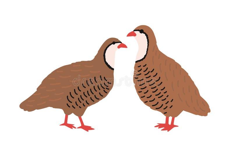 Para przepiórki odizolowywać na białym tle Uroczy rolny drobiu, domowego lub ślicznego mały barnyard ptak, gamebird ilustracji