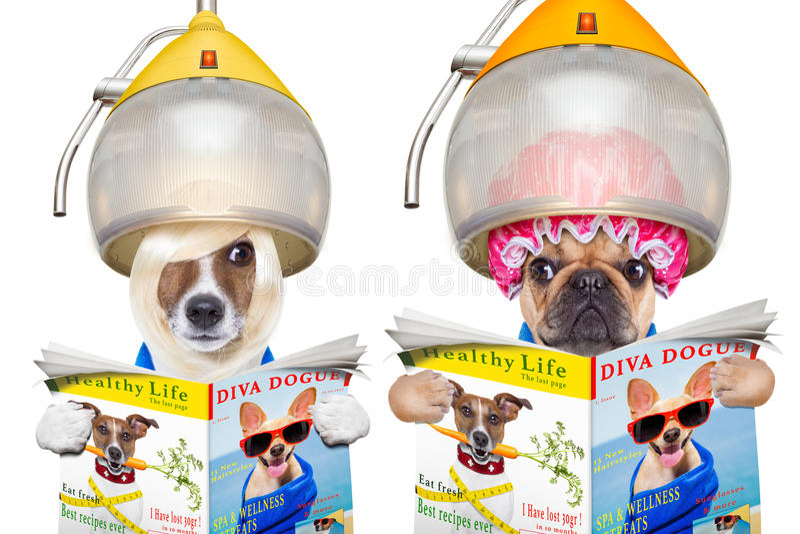 Para psy przy fryzjerami fotografia royalty free