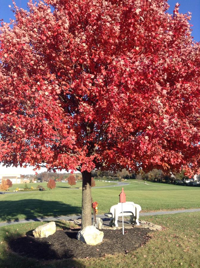 Para sentarse debajo del árbol rojo imagenes de archivo