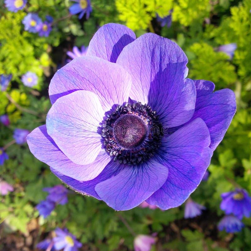 Para-sol na pressão do bb q10 da flor fotografia de stock