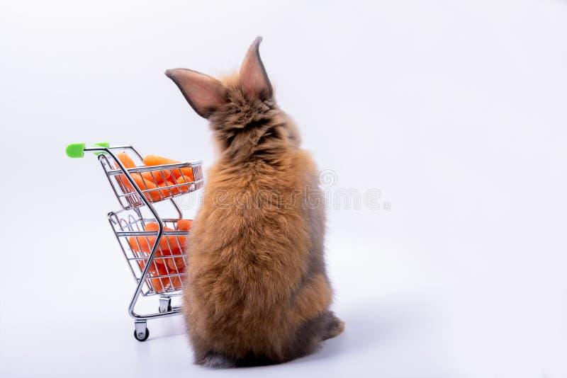 para trás dos coelhos bonitos do bebê imagem de stock royalty free