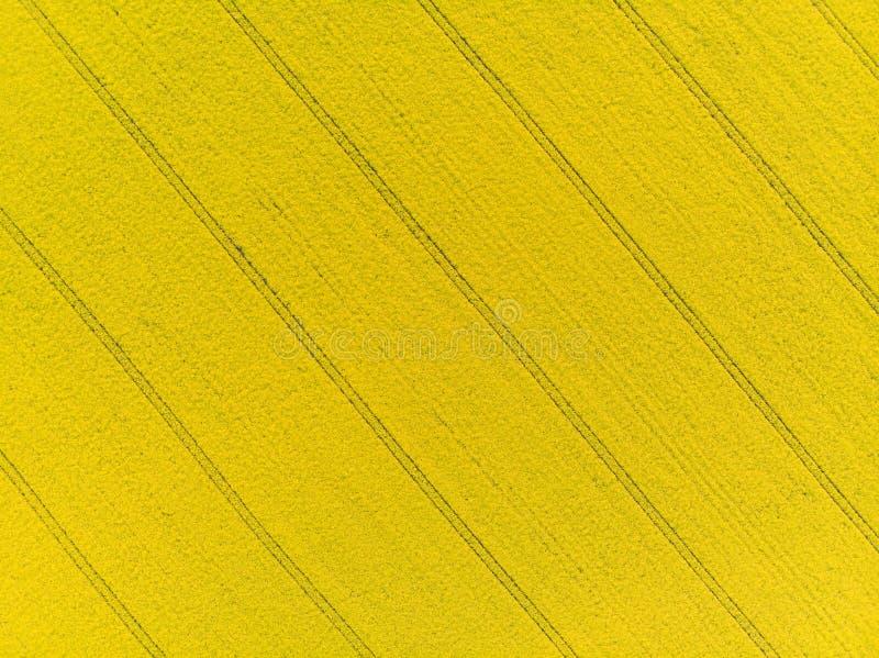 Para tragar a ideia aérea do campo amarelo do canola imagens de stock