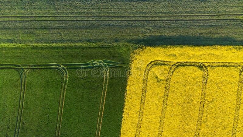 Para tragar a ideia aérea do canola amarelo e de campos de grão verdes imagens de stock