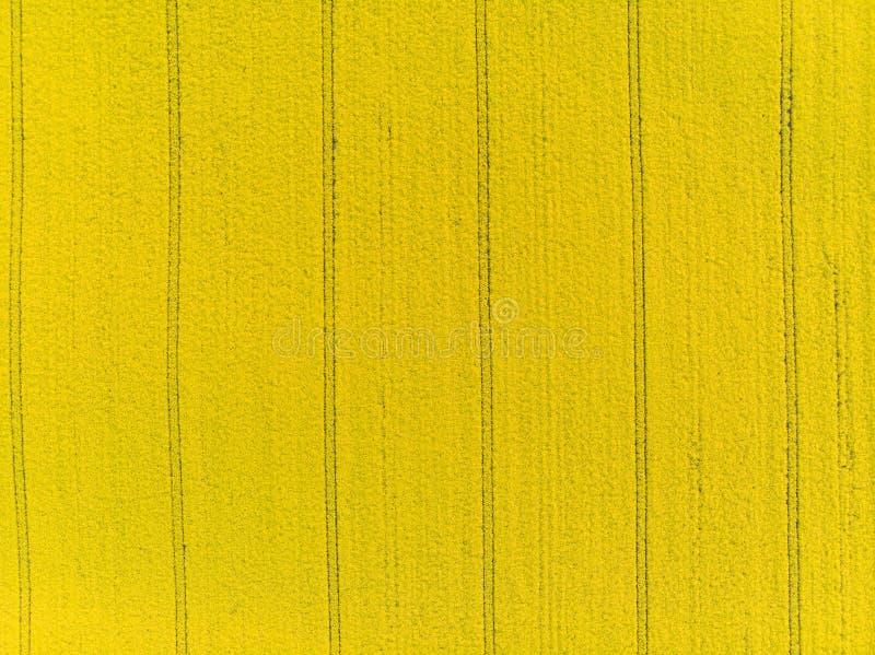 Para tragar a ideia a?rea do campo amarelo do canola imagens de stock