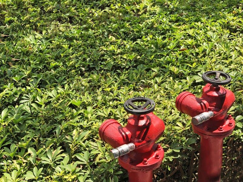 Para ulicy wody hydranty zdjęcie royalty free