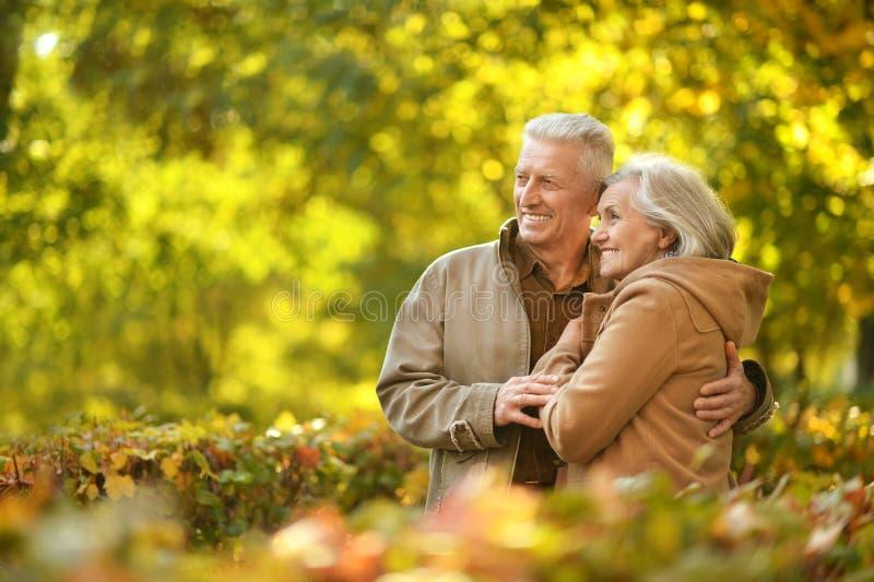Para w jesień parku obraz royalty free