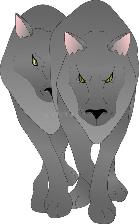 Para wilki, wilk z wilkiem, szarość i kolor żółty, ono przygląda się ilustracji