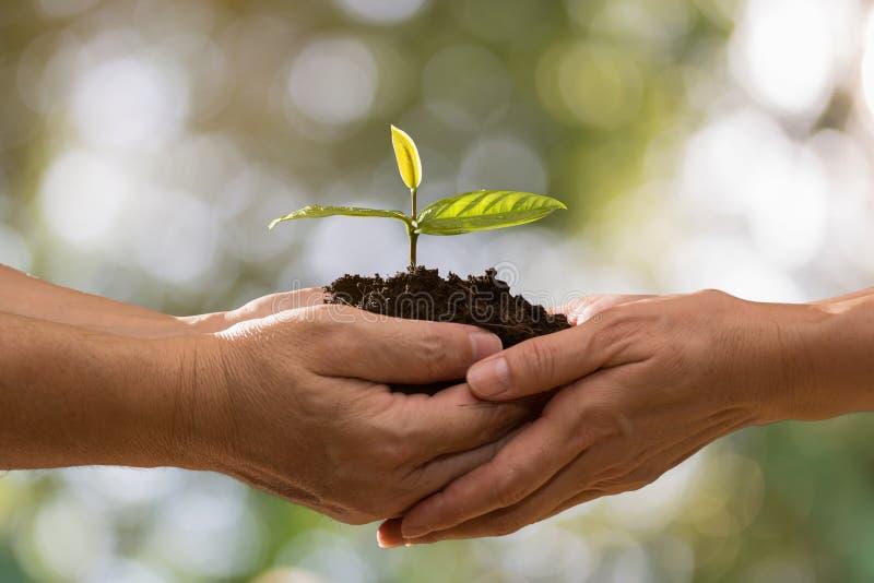 Para wręcza trzymać zielonej rośliny obrazy stock