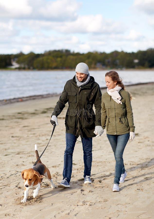 Para z beagle psa odprowadzeniem wzdłuż jesieni plaży zdjęcia stock