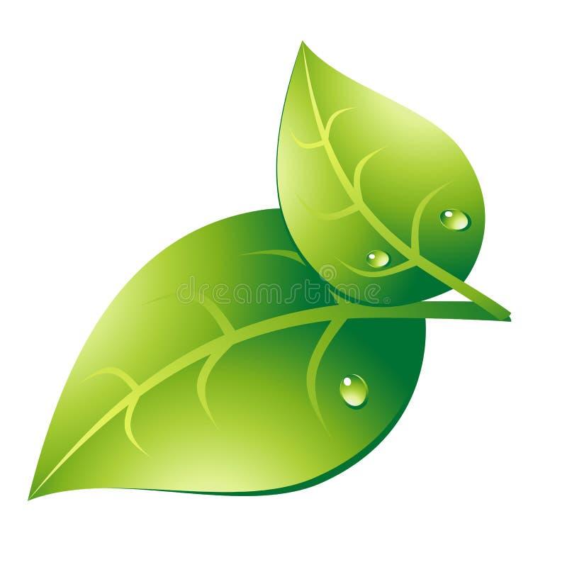 Para zielony liść obraz stock