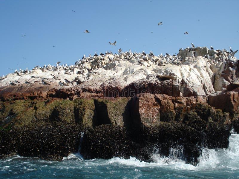 Paracas - Pisco - le Pérou photo libre de droits