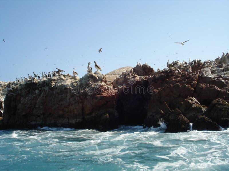 Paracas - Pisco - le Pérou image libre de droits