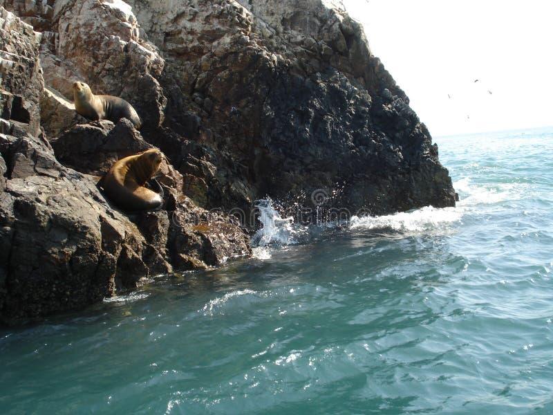 Paracas - Pisco - le Pérou photos stock