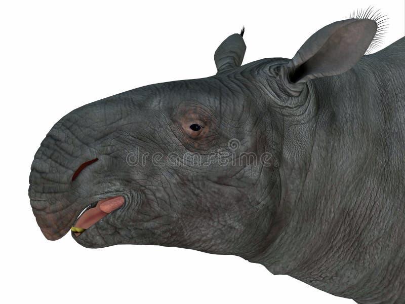 Paraceratherium哺乳动物的头 向量例证