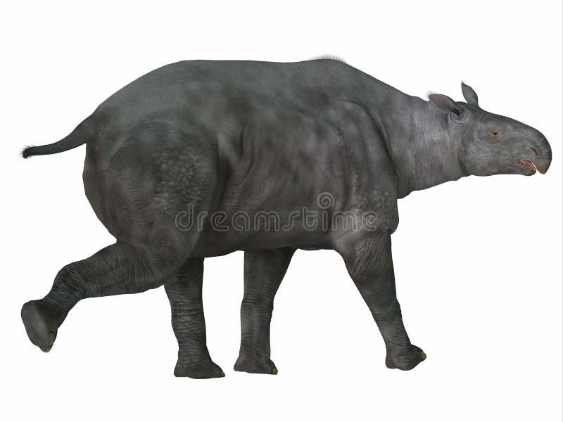 Paraceratherium哺乳动物的尾巴 皇族释放例证