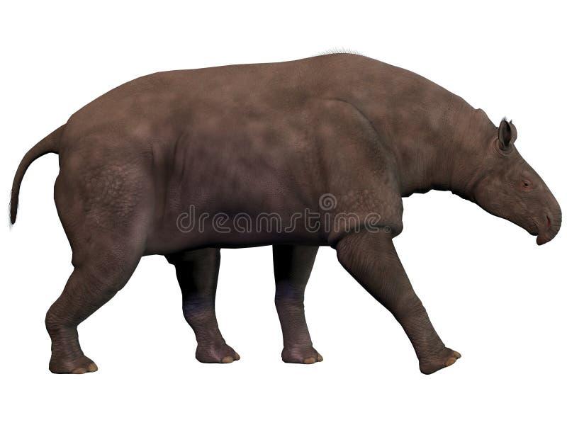 Paraceratherium no branco ilustração stock