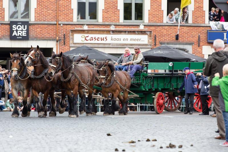 Parada pesada Lennik dos cavalos fotos de stock