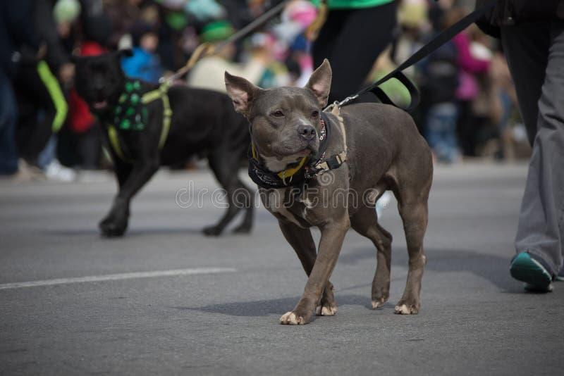 Parade Indianapolis 2018 St. Patrick's Tages lizenzfreies stockfoto