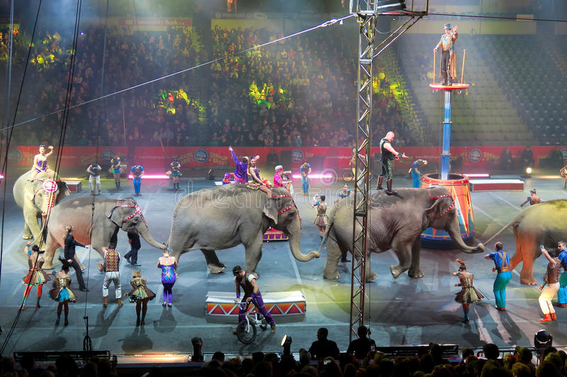 Parade Lap. The Ringling Brothers and Barnum &Bailey Circus elephants make a symbolic parade lap around the arena at the end of one of their very last shows in royalty free stock photo