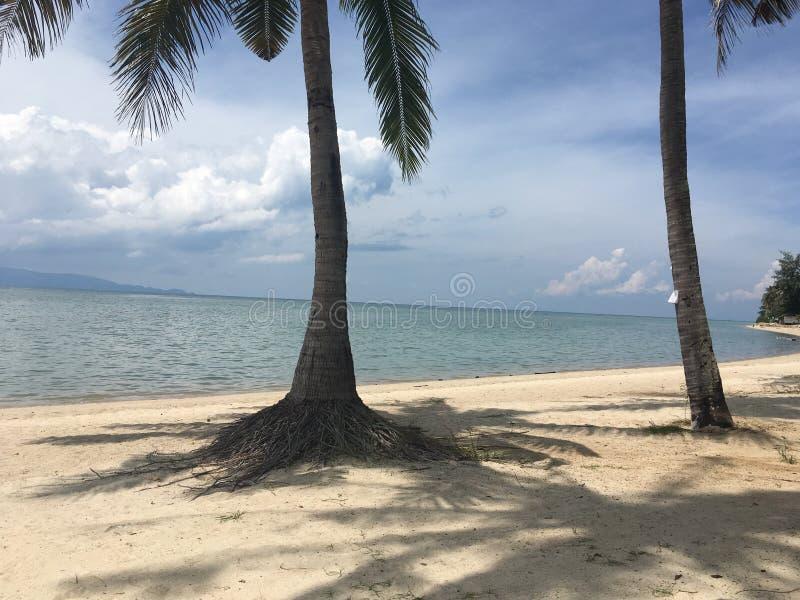 Paradies auf der Insel stockfotos