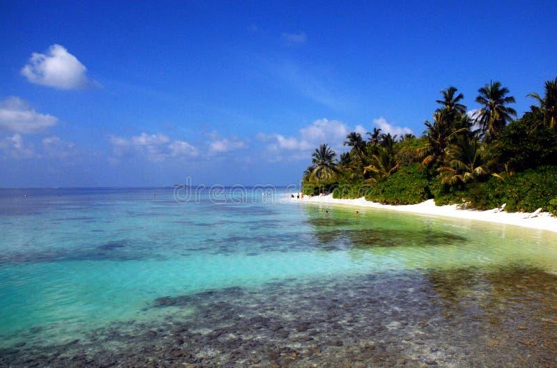 Paradies in den Malediven stockfotos