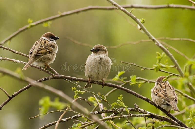 Paradiesvögel. stockfoto