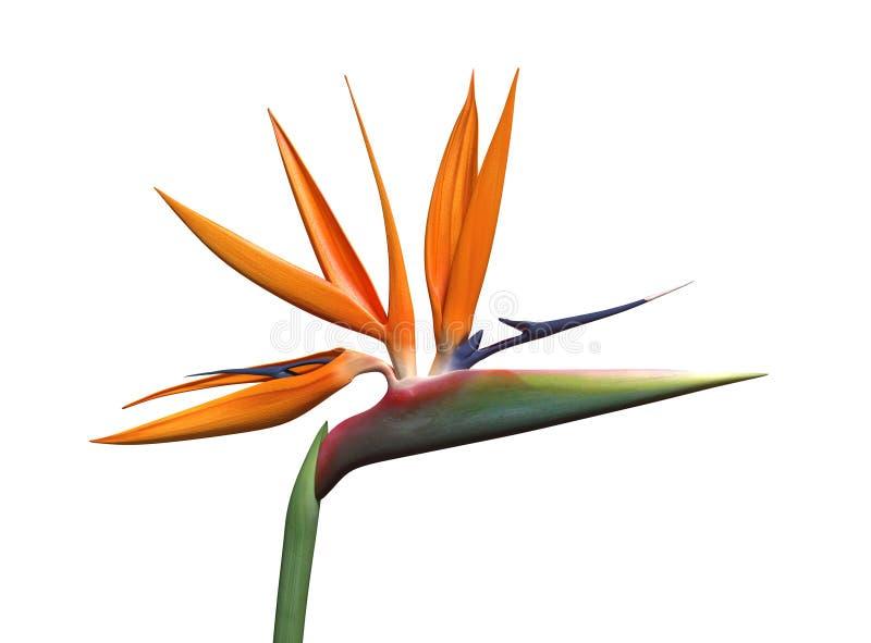Paradiesvogel Blume vektor abbildung