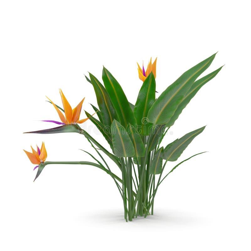 Paradiesvogel Blume auf einem Weiß Abbildung 3D lizenzfreie abbildung