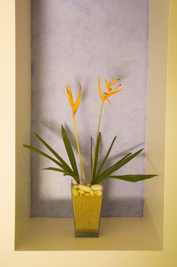 Paradiesvogel Blumen lizenzfreies stockfoto