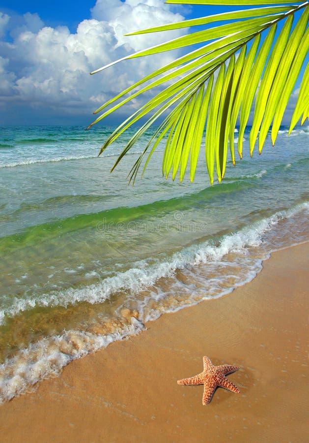 Paradijs met Palm stock afbeelding