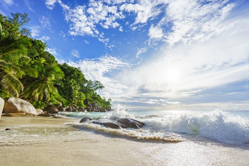 Paradijs tropisch strand met rotsen, palmen en turkoois wate stock afbeelding