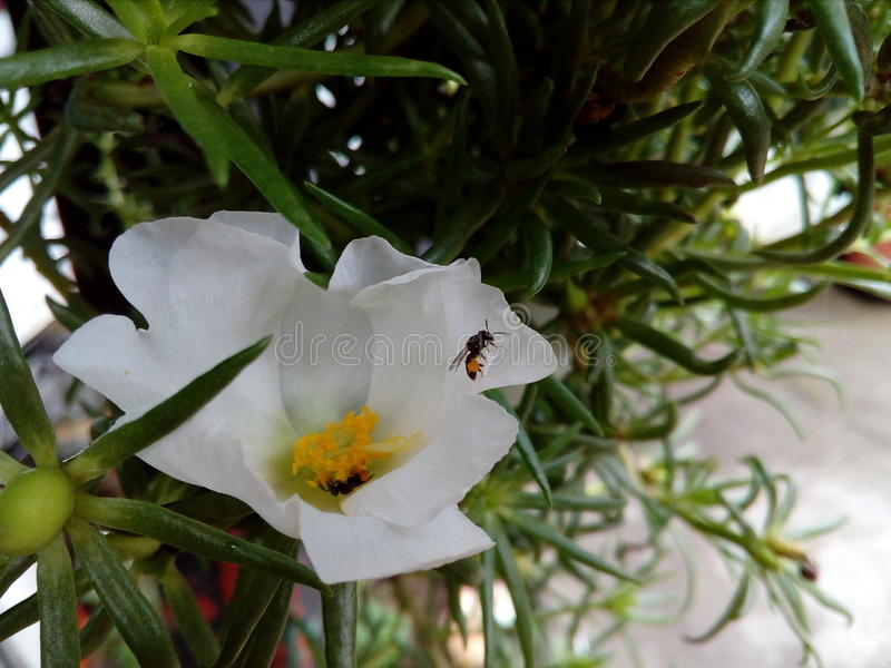 Paradis blanc photos stock