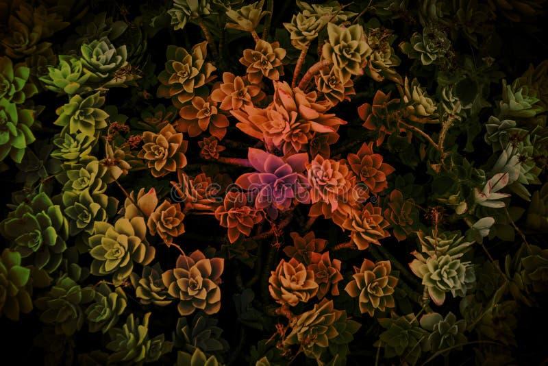paradis de nature d'élément de conception de composition photos stock
