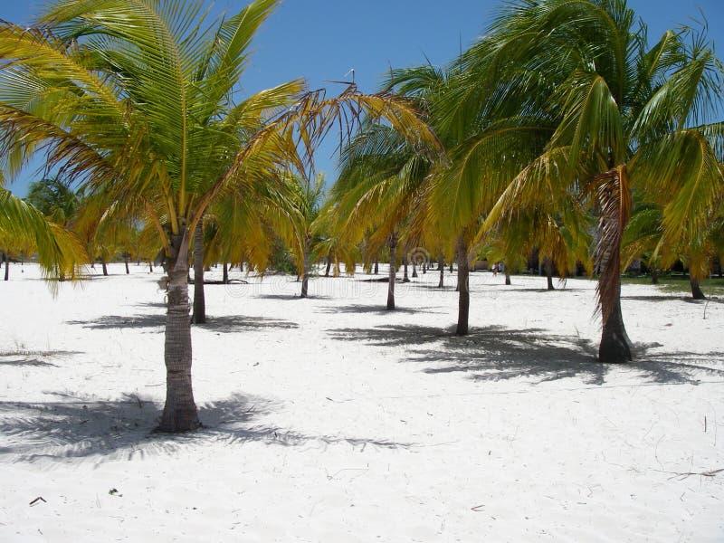 Paradis de Palm Beach