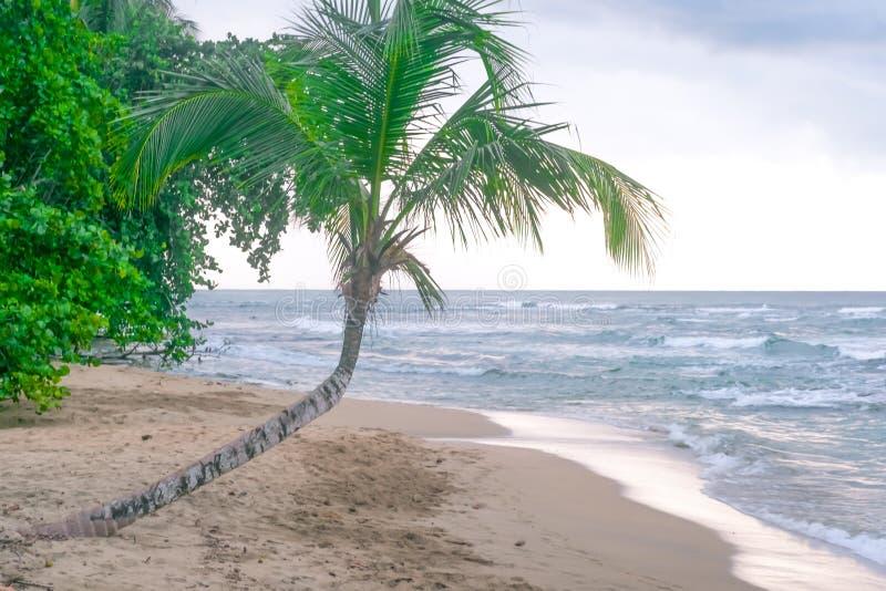 Paradis des Caraïbes de mer d'océan d'arbres de Costa Rica Palm de côte photos libres de droits