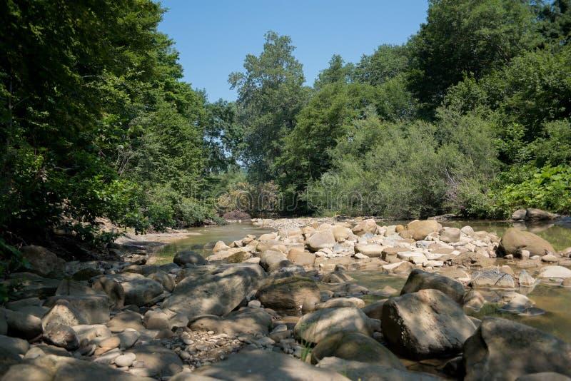 paradis för natur för sammansättningsdesignelement Bergflod som flödar till och med den gröna skogen arkivfoto