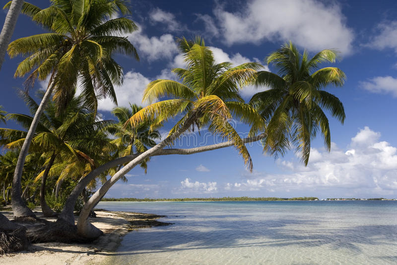 Paradis tropical d'île - îles Cook image libre de droits