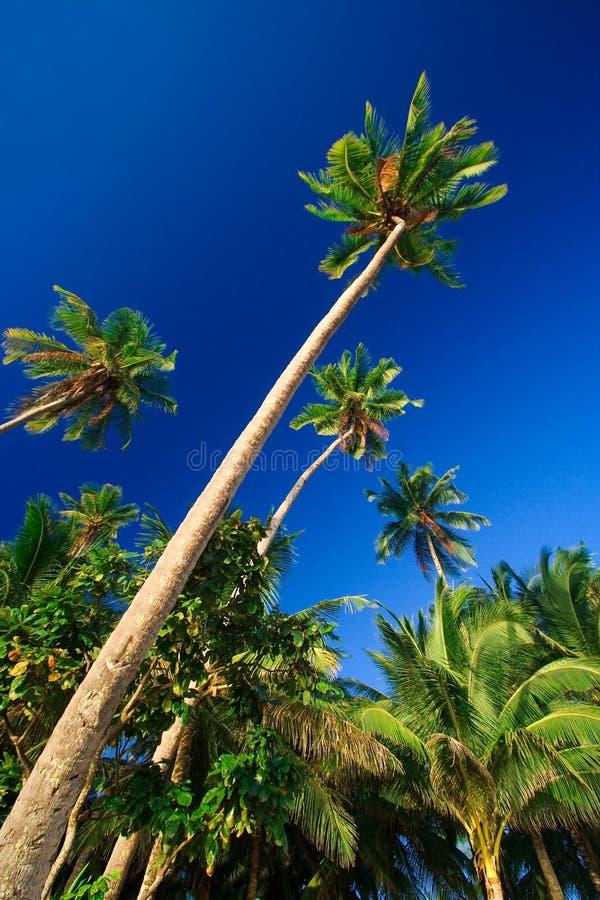 Paradis Tropical De Palmier Image stock