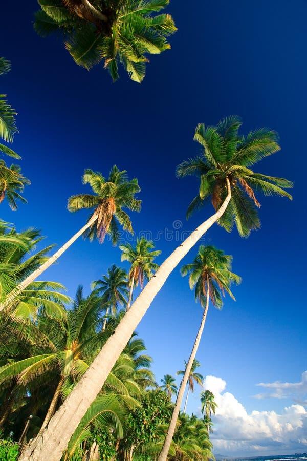 Paradis Tropical De Palmier Photographie stock libre de droits