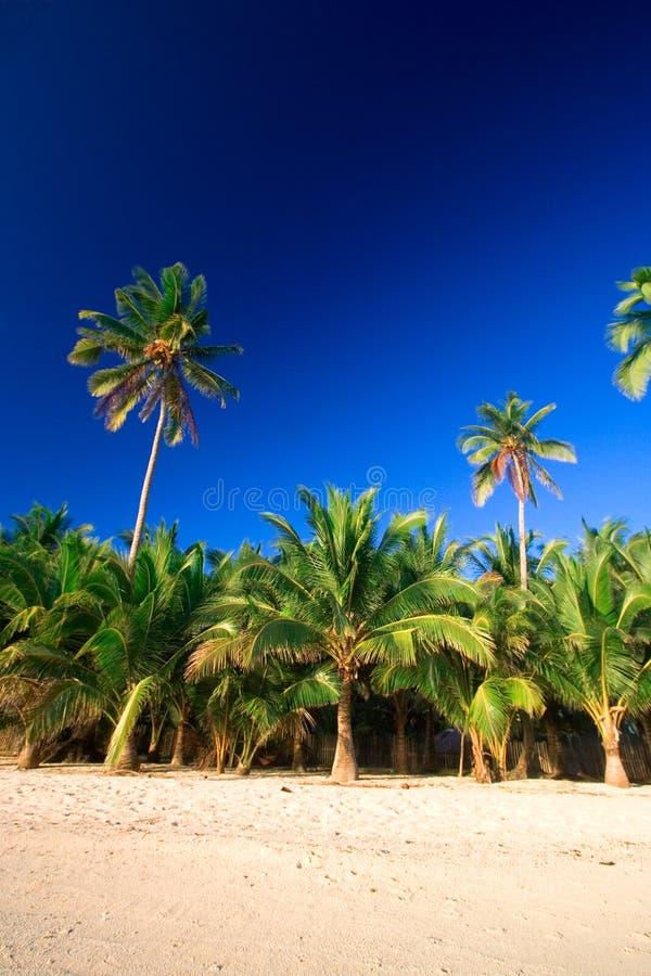 Paradis Tropical De Palmier Image libre de droits