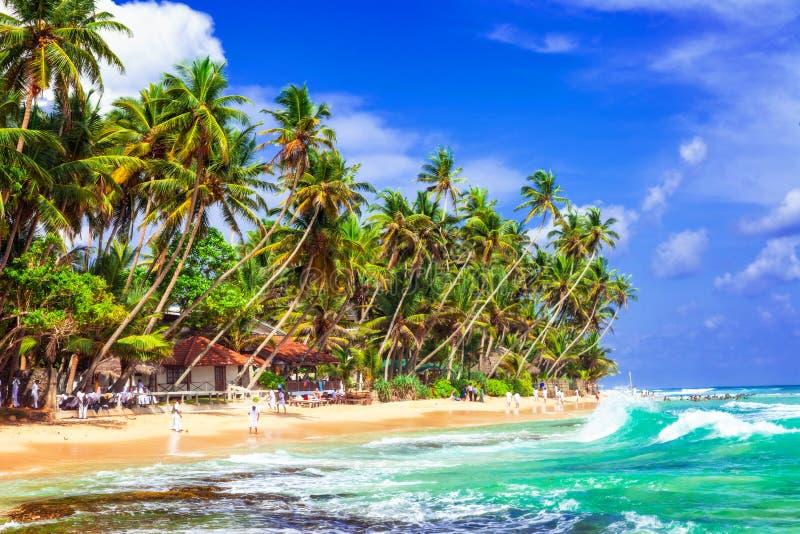 Paradis tropical de paume dans Sri Lanka images stock