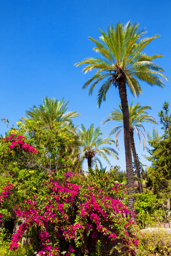 Download Paradise stock photo. Image of enjoyment, coastline, nature - 27180052