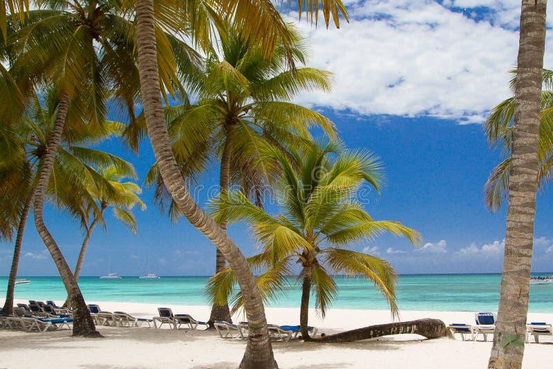 paradise fotos de stock royalty free